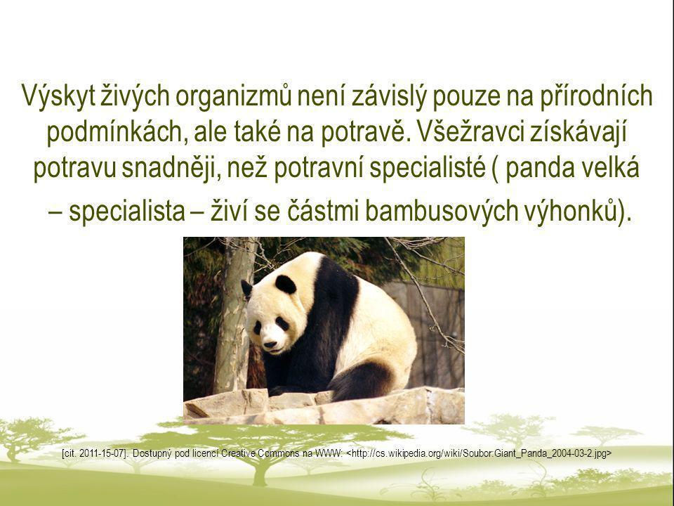 – specialista – živí se částmi bambusových výhonků).
