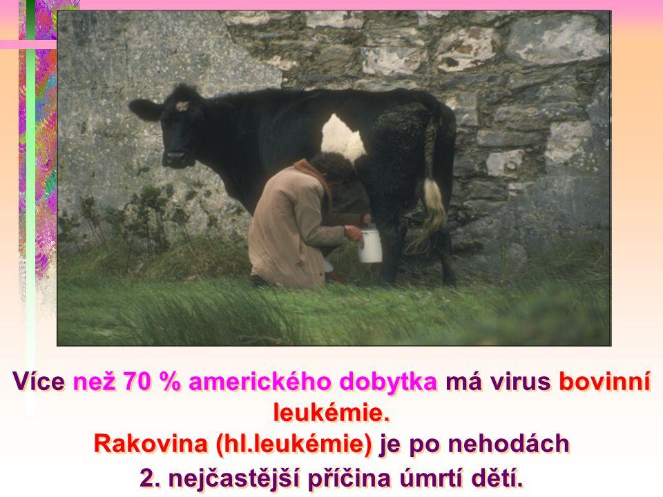 Více než 70 % amerického dobytka má virus bovinní leukémie