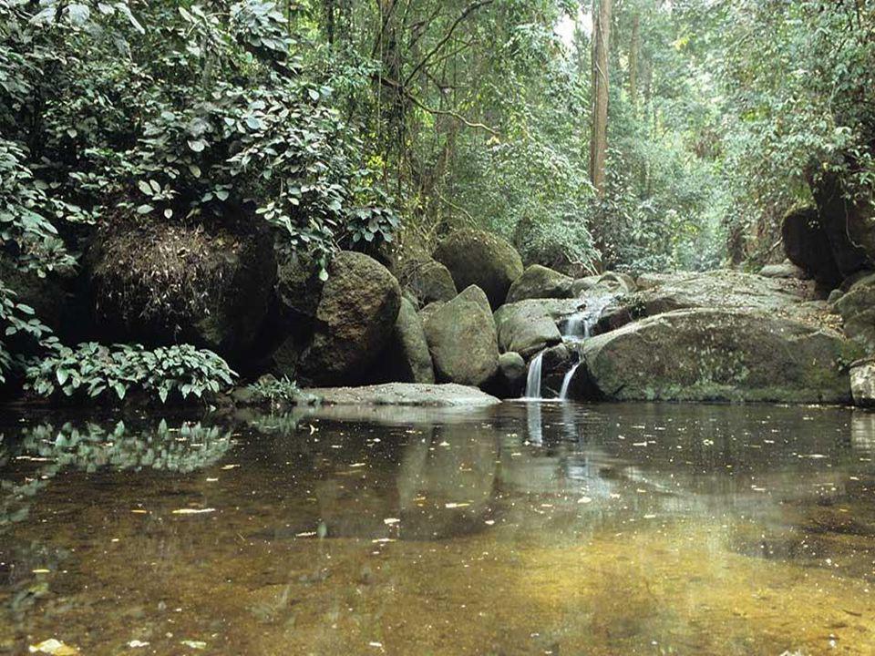 PODNEBÍ Klima: Tropický pás