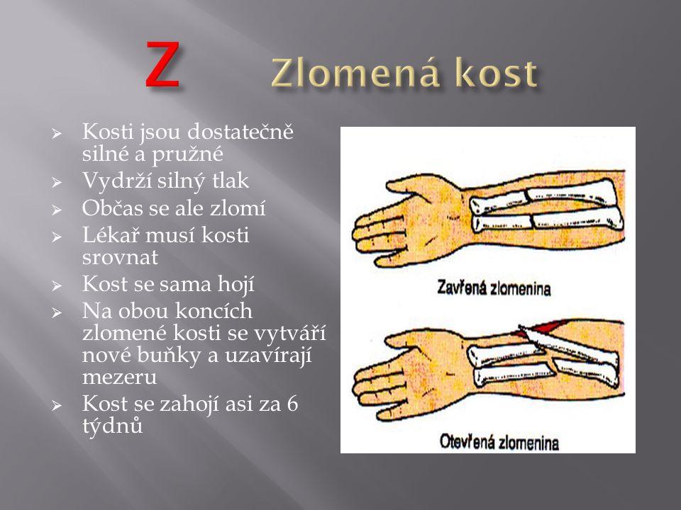 Z Zlomená kost Kosti jsou dostatečně silné a pružné Vydrží silný tlak