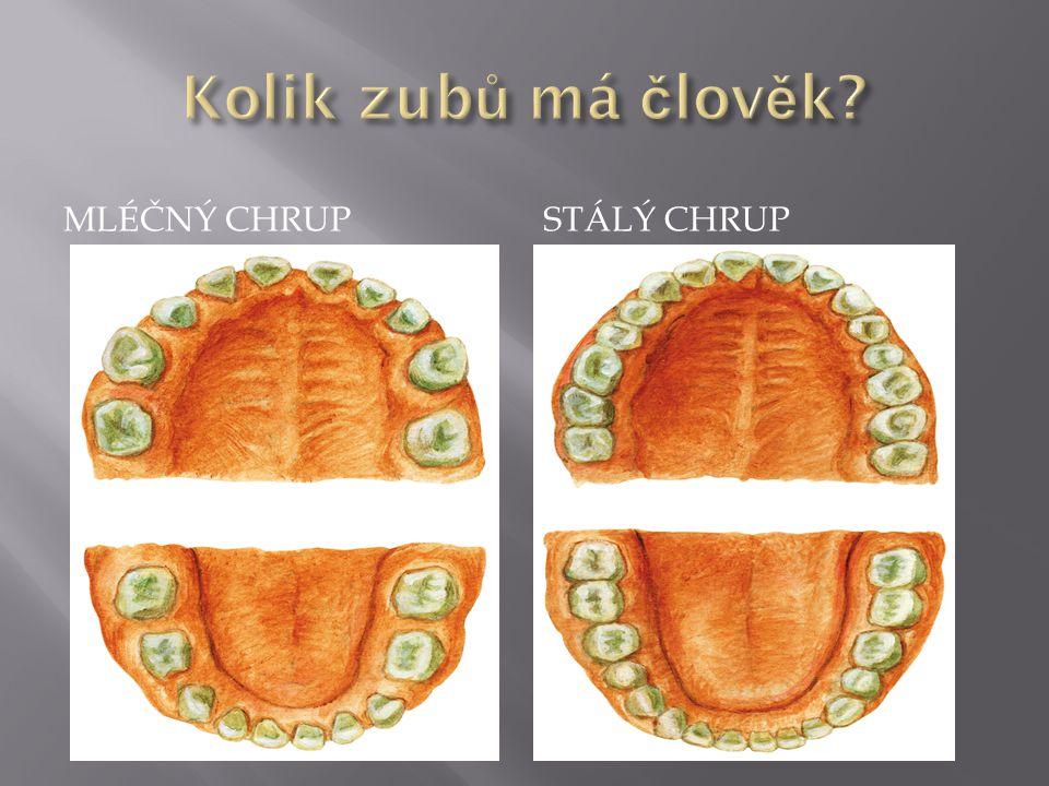 Kolik zubů má člověk Mléčný chrup Stálý chrup