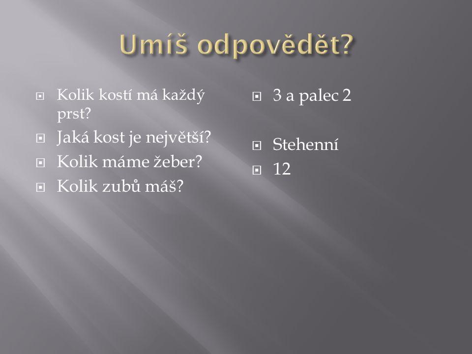Umíš odpovědět 3 a palec 2 Jaká kost je největší Stehenní