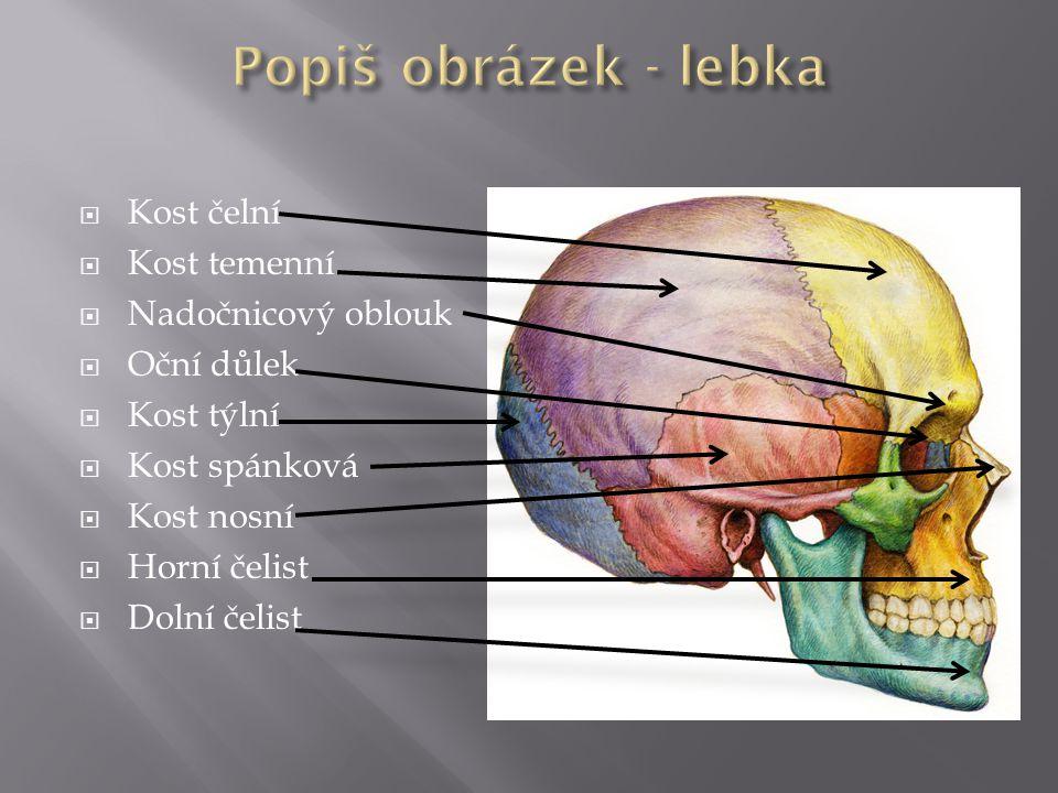 Popiš obrázek - lebka Kost čelní Kost temenní Nadočnicový oblouk