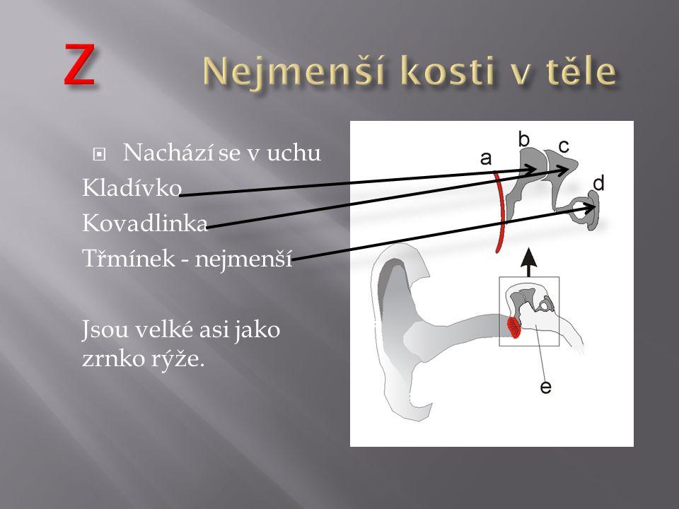 Z Nejmenší kosti v těle Nachází se v uchu Kladívko Kovadlinka