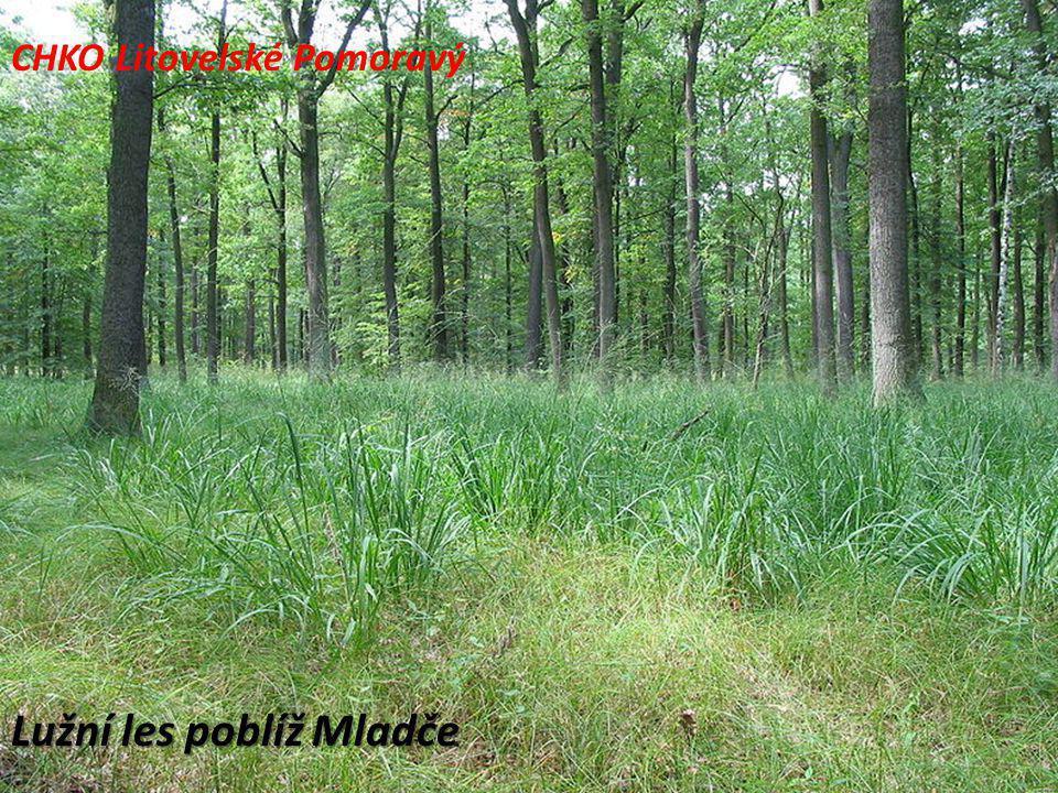 Lužní les poblíž Mladče