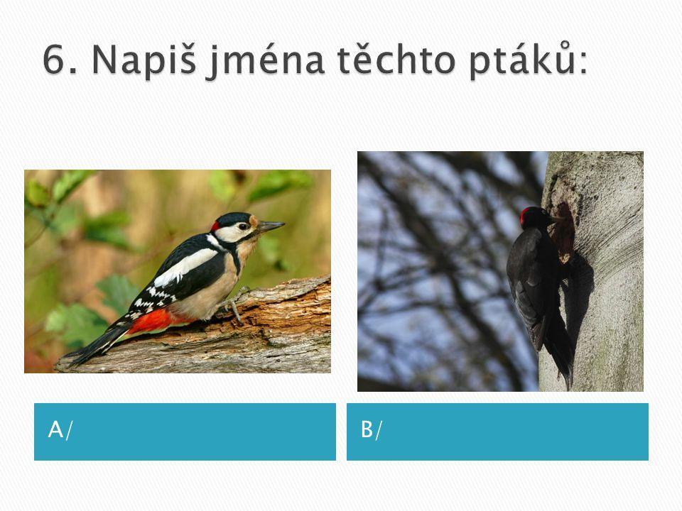 6. Napiš jména těchto ptáků: