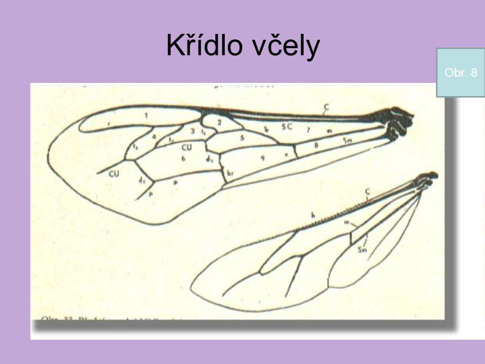 Křídlo včely Obr. 8