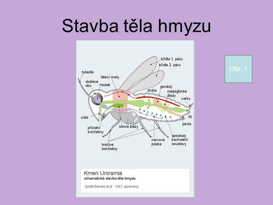 Stavba těla hmyzu Obr. 1