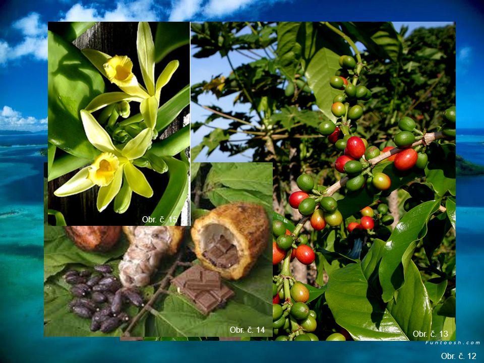 Madagaskar – pěstování koření (vanilka, hřebíček, kávovník, kakaovník)