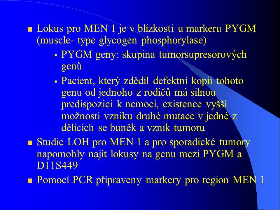 Lokus pro MEN 1 je v blízkosti u markeru PYGM (muscle- type glycogen phosphorylase)