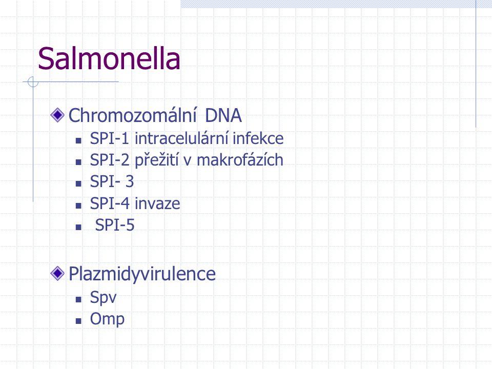 Salmonella Chromozomální DNA Plazmidyvirulence