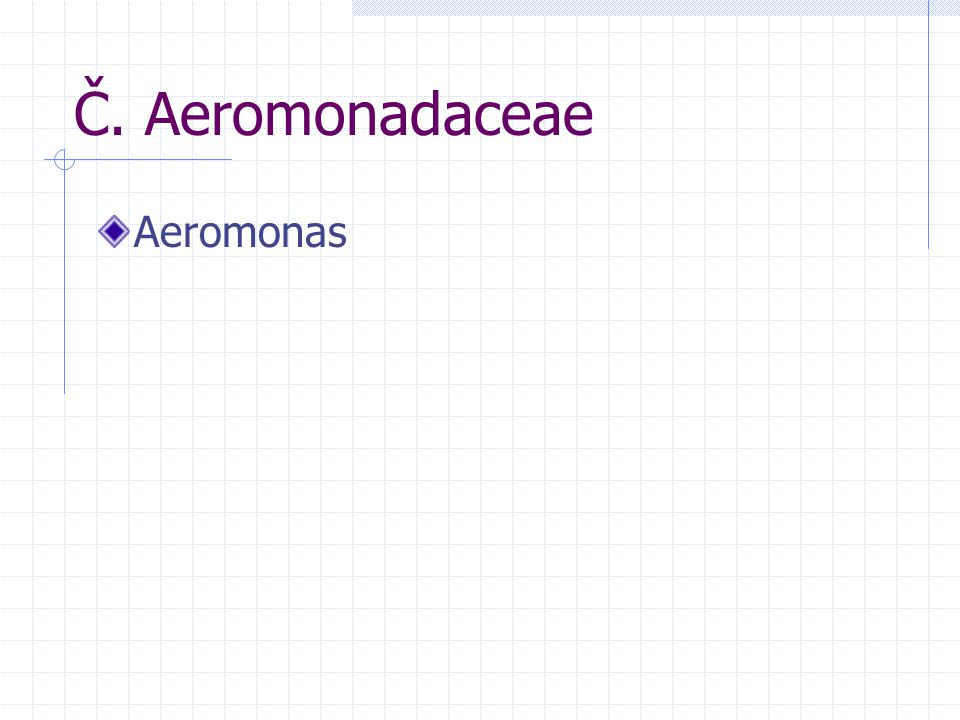 Č. Aeromonadaceae Aeromonas