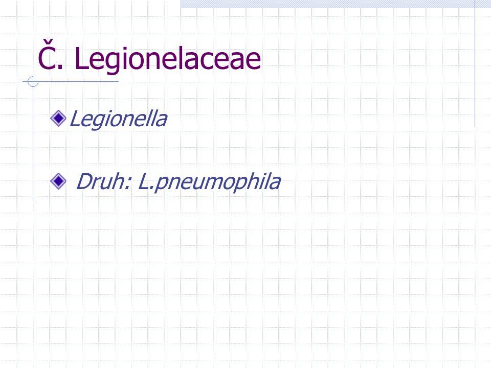 Č. Legionelaceae Legionella Druh: L.pneumophila