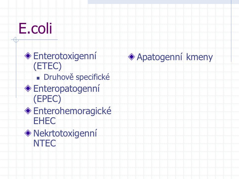 E.coli Enterotoxigenní (ETEC) Enteropatogenní (EPEC)