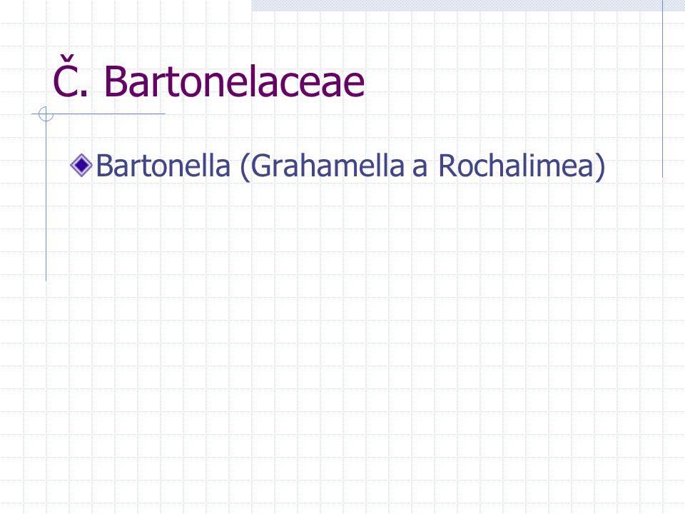 Č. Bartonelaceae Bartonella (Grahamella a Rochalimea)