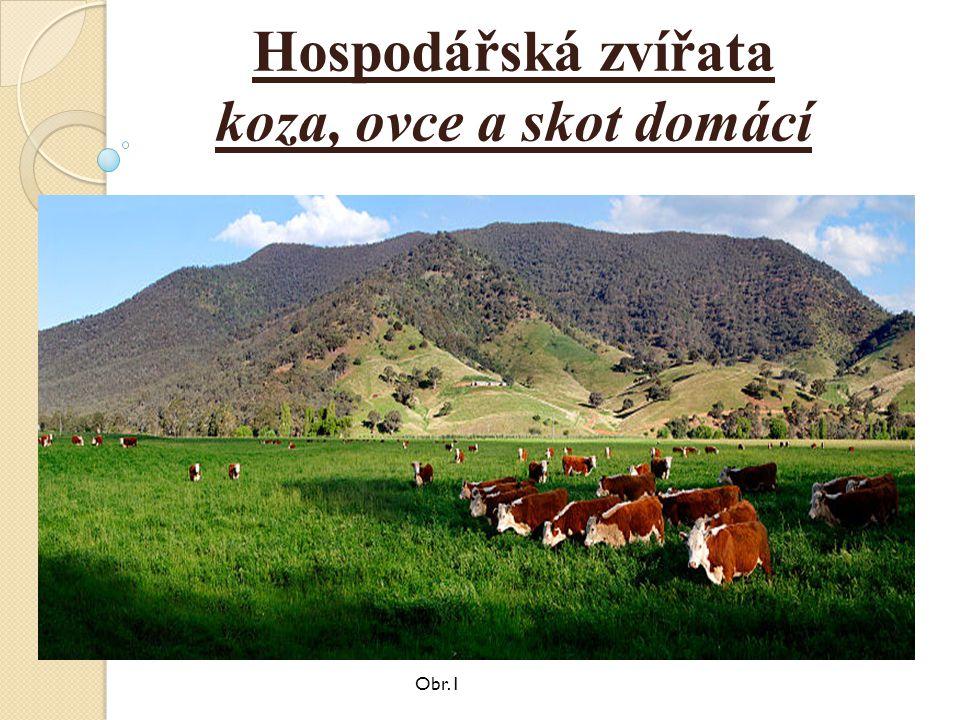 Hospodářská zvířata koza, ovce a skot domácí