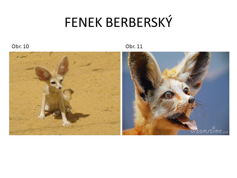 FENEK BERBERSKÝ Obr. 10 Obr.