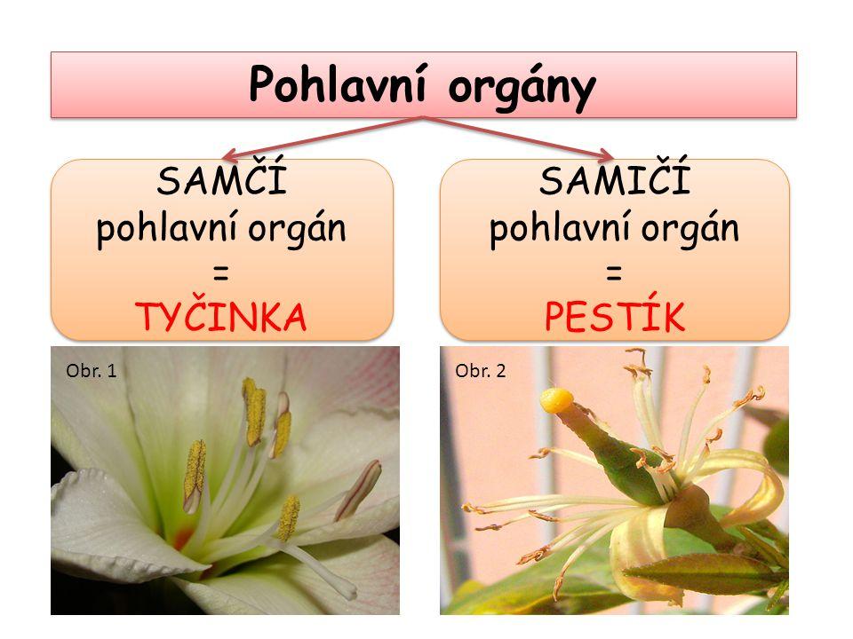 Pohlavní orgány SAMČÍ pohlavní orgán = TYČINKA SAMIČÍ pohlavní orgán =