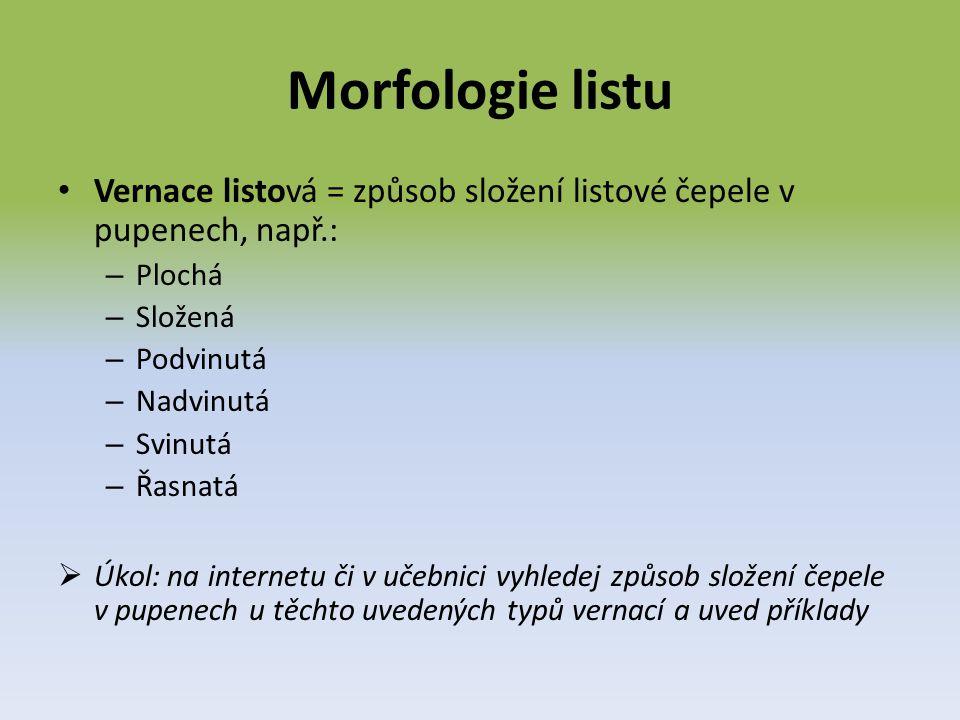 Morfologie listu Vernace listová = způsob složení listové čepele v pupenech, např.: Plochá. Složená.