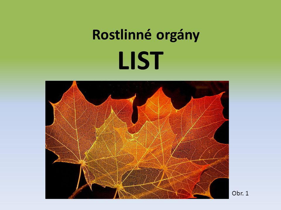 Rostlinné orgány LIST Obr. 1