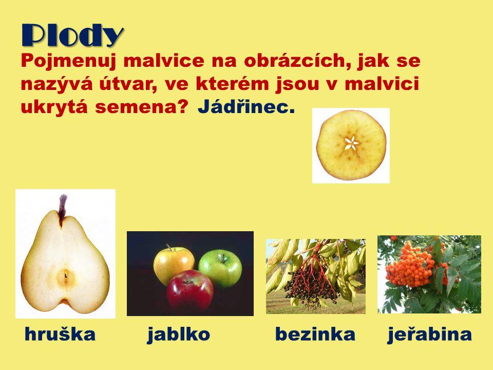 Plody Pojmenuj malvice na obrázcích, jak se nazývá útvar, ve kterém jsou v malvici ukrytá semena Jádřinec.