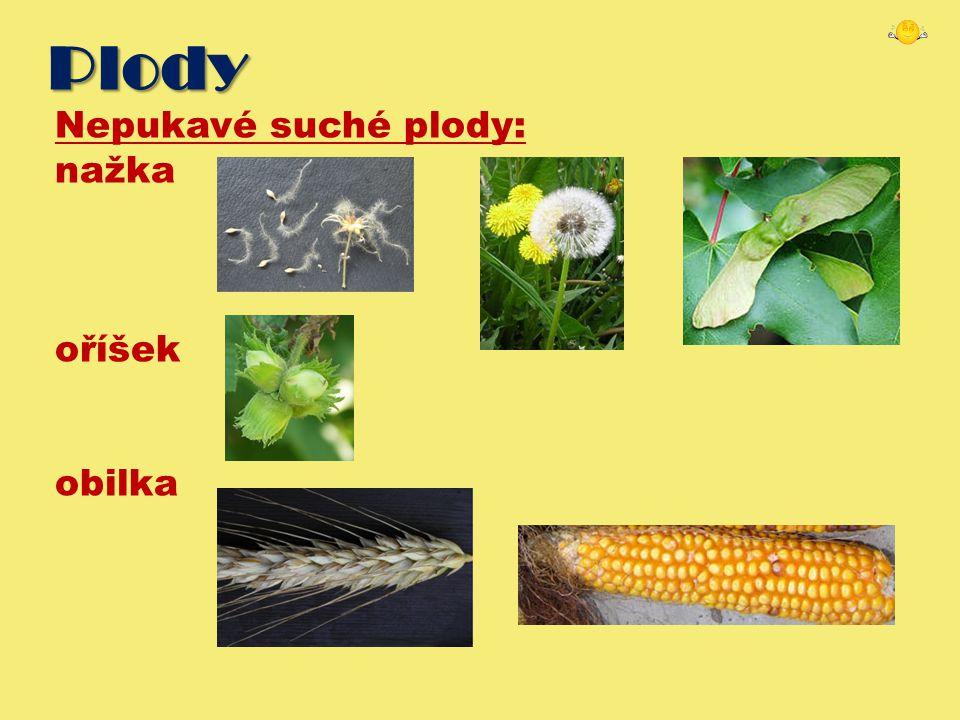 Plody Nepukavé suché plody: nažka oříšek obilka