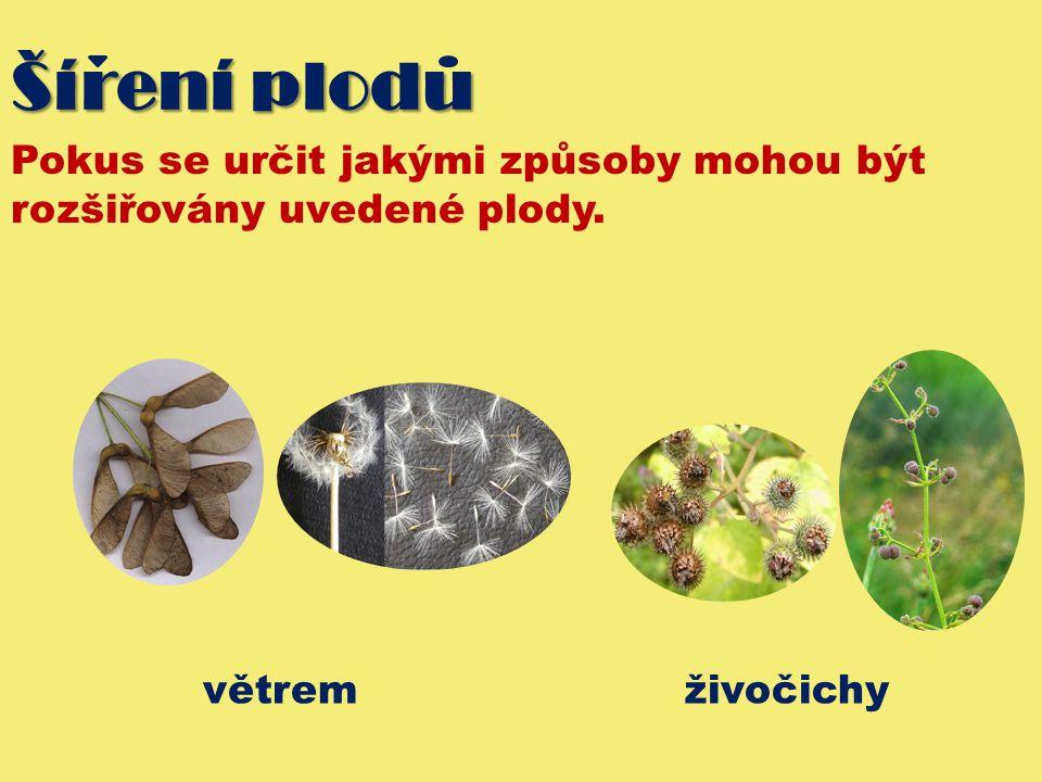 Šírení plodu Pokus se určit jakými způsoby mohou být rozšiřovány uvedené plody.