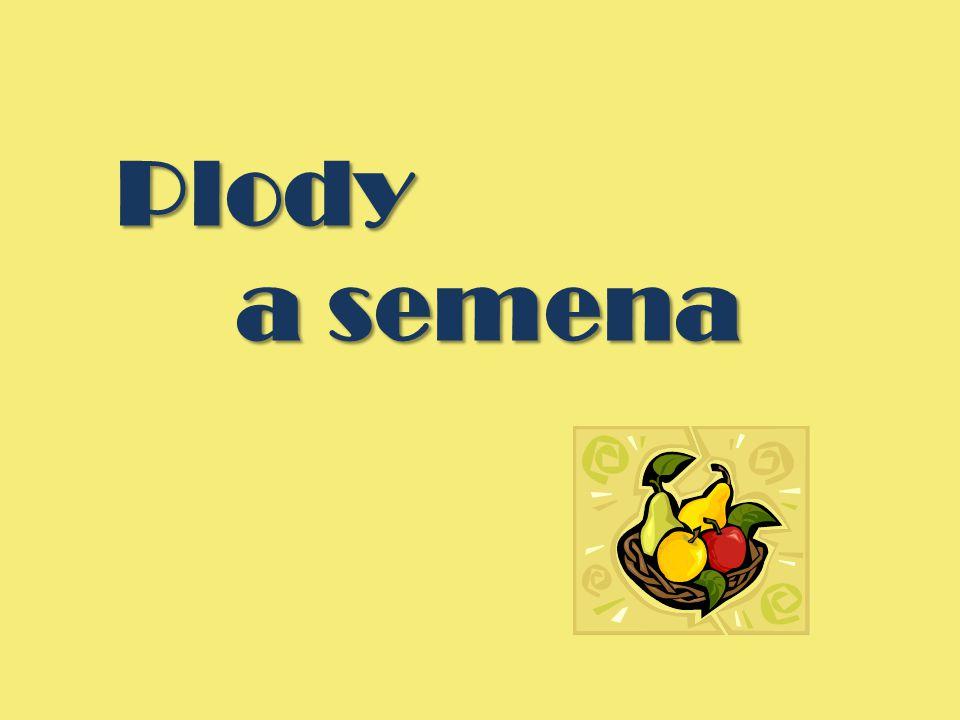 Plody a semena
