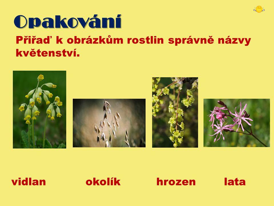 Opakování Přiřaď k obrázkům rostlin správně názvy květenství.