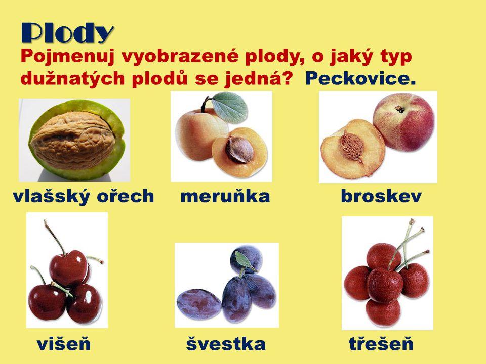Plody Pojmenuj vyobrazené plody, o jaký typ dužnatých plodů se jedná