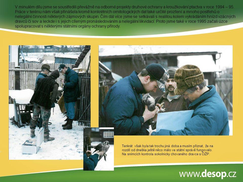 V minulém dílu jsme se soustředili převážně na odborné projekty druhové ochrany a kroužkování ptactva v roce 1994 – 95. Práce v terénu nám však přinášela kromě konkrétních ornitologických dat také určité prozření a mnoho postřehů o nelegální činnosti některých zájmových skupin. Čím dál více jsme se setkávali s realitou kolem vykrádáním hnízd vzácných dravců či sov a leckde i s jejich cíleným pronásledováním a nelegální likvidací. Proto jsme také v roce 1995 začali úzce spolupracovat s některými státními orgány ochrany přírody.