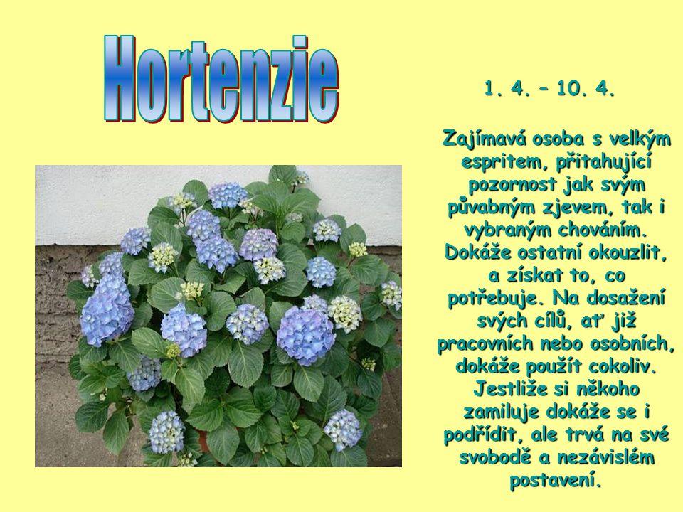 Hortenzie 1. 4. – 10. 4.