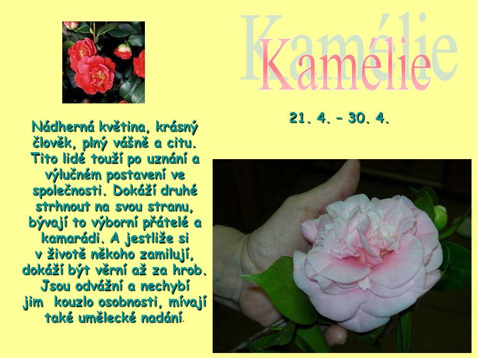 Kamélie