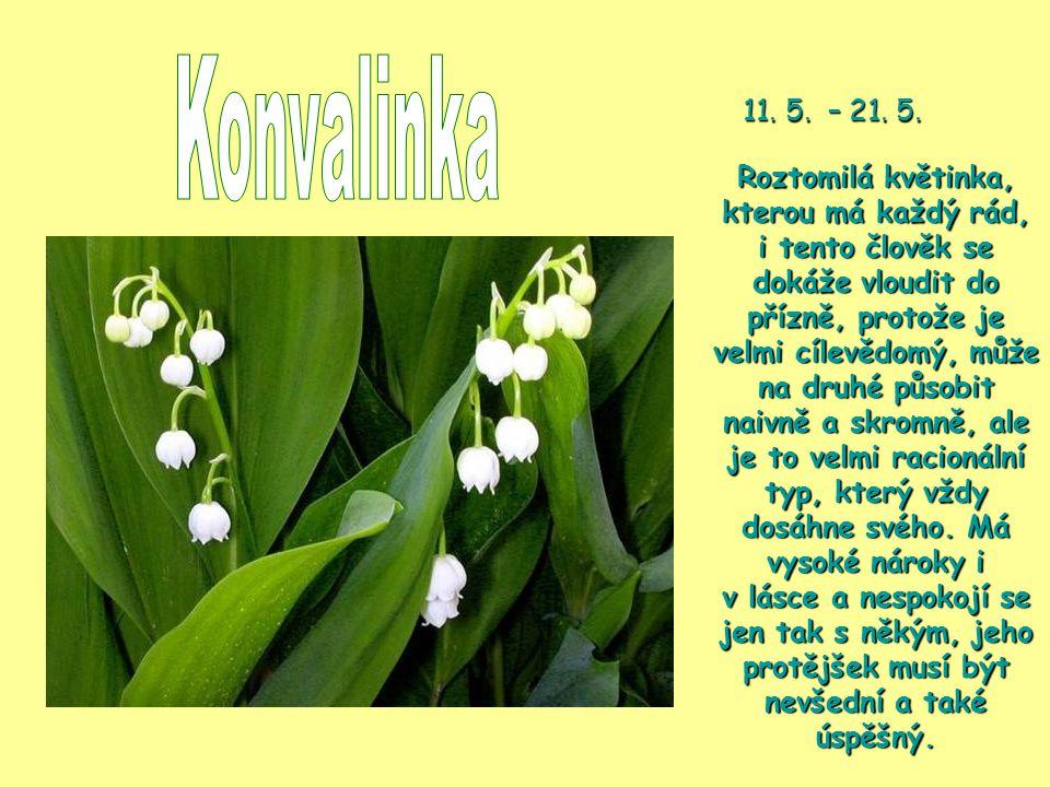 Konvalinka 11. 5. – 21. 5.
