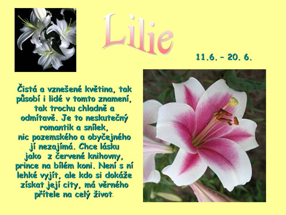 Lilie 11.6. – 20. 6.