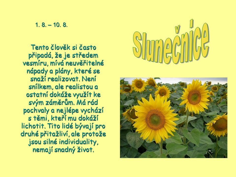 Slunečnice 1. 8. – 10. 8.