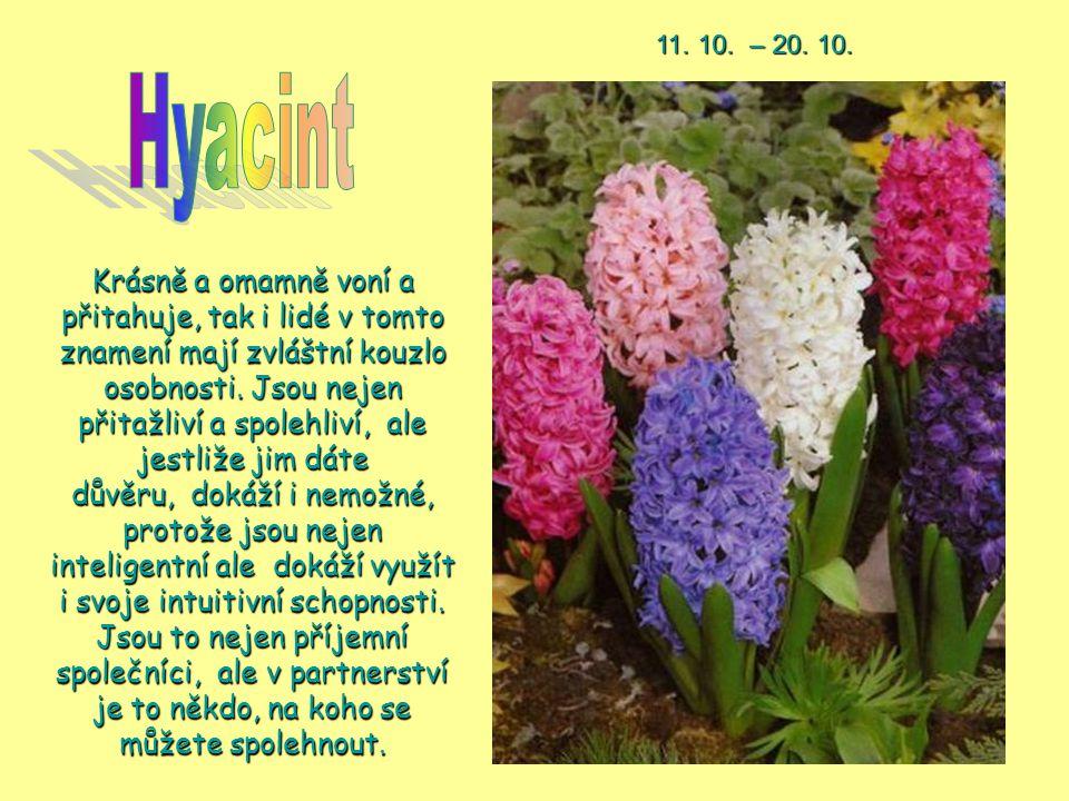 11. 10. – 20. 10. Hyacint.