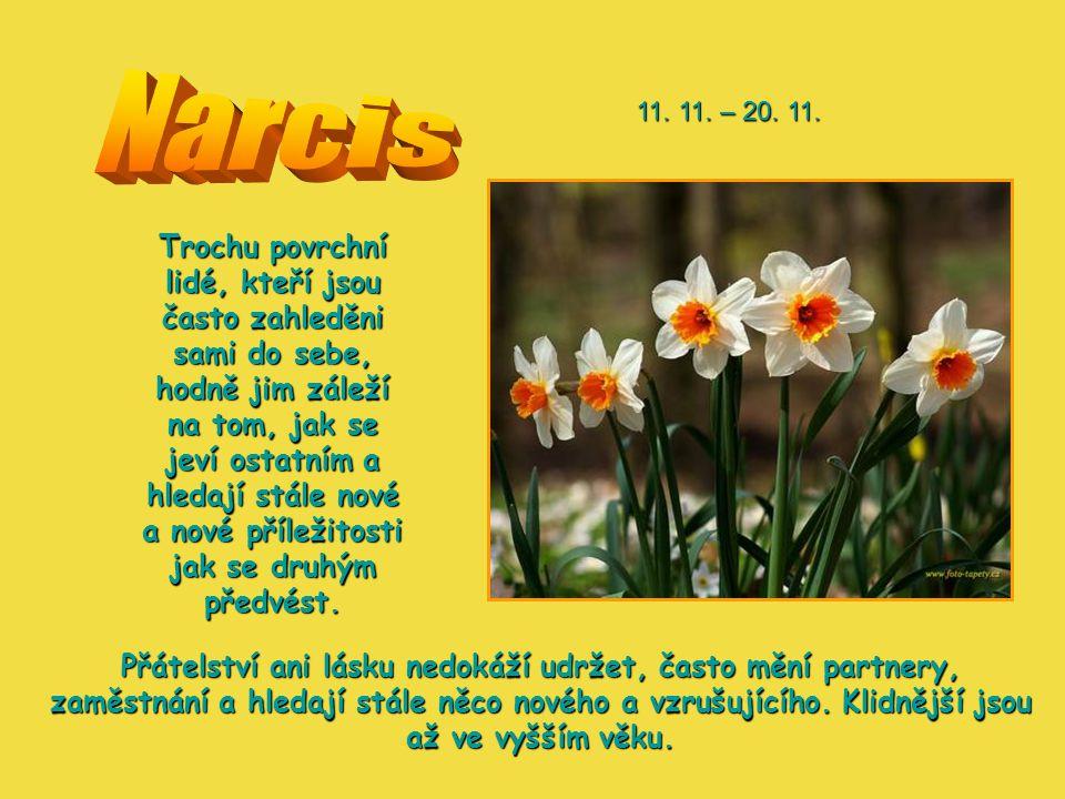 Narcis 11. 11. – 20. 11.