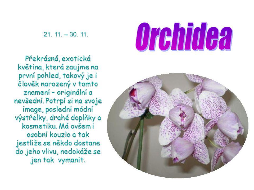Orchidea 21. 11. – 30. 11.