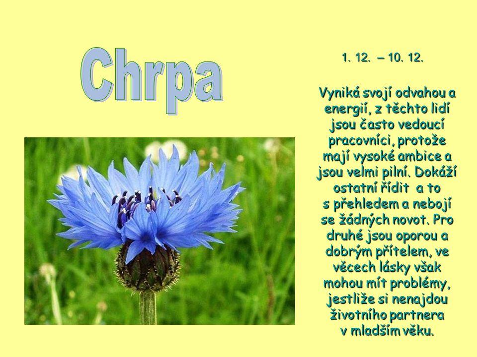 Chrpa 1. 12. – 10. 12.