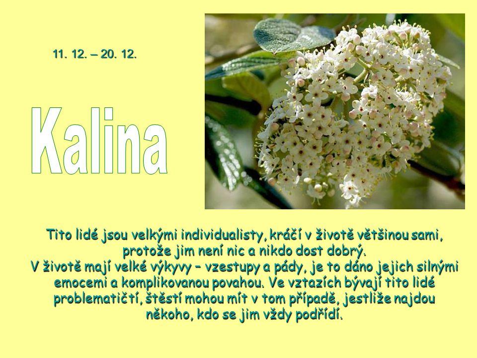 11. 12. – 20. 12. Kalina.
