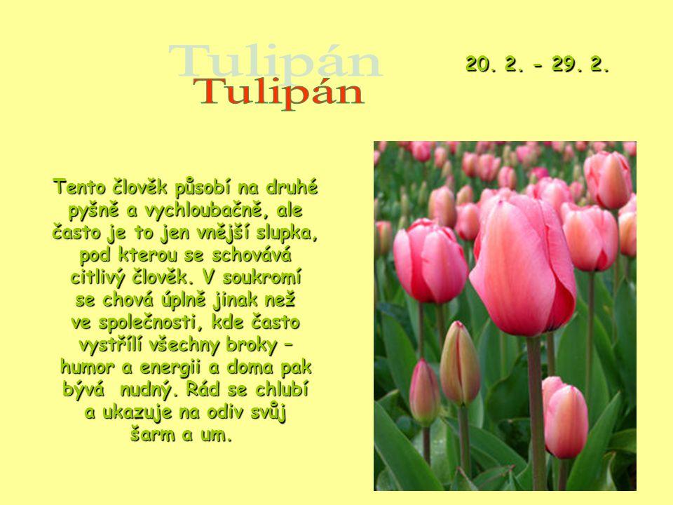 20. 2. - 29. 2. Tulipán.
