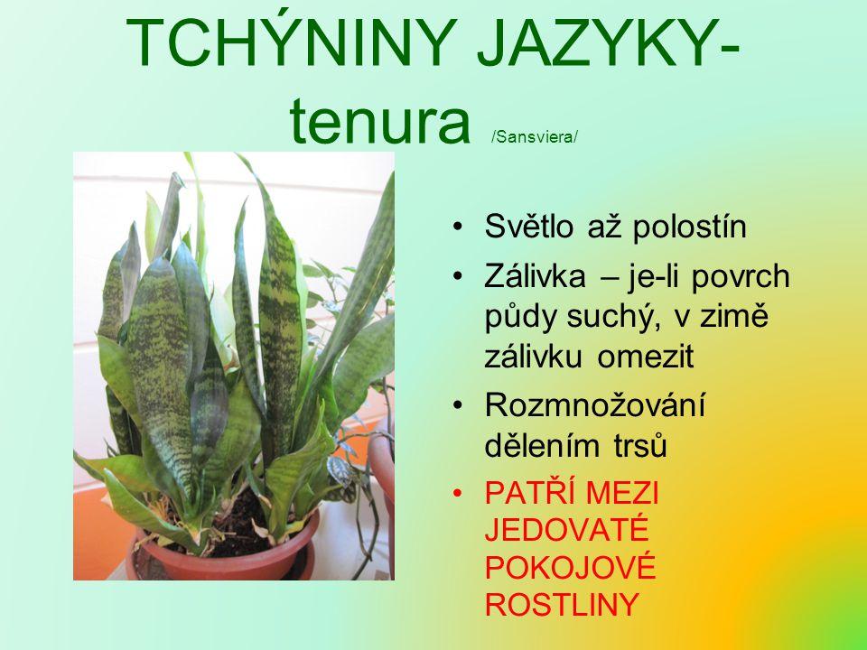 TCHÝNINY JAZYKY- tenura /Sansviera/