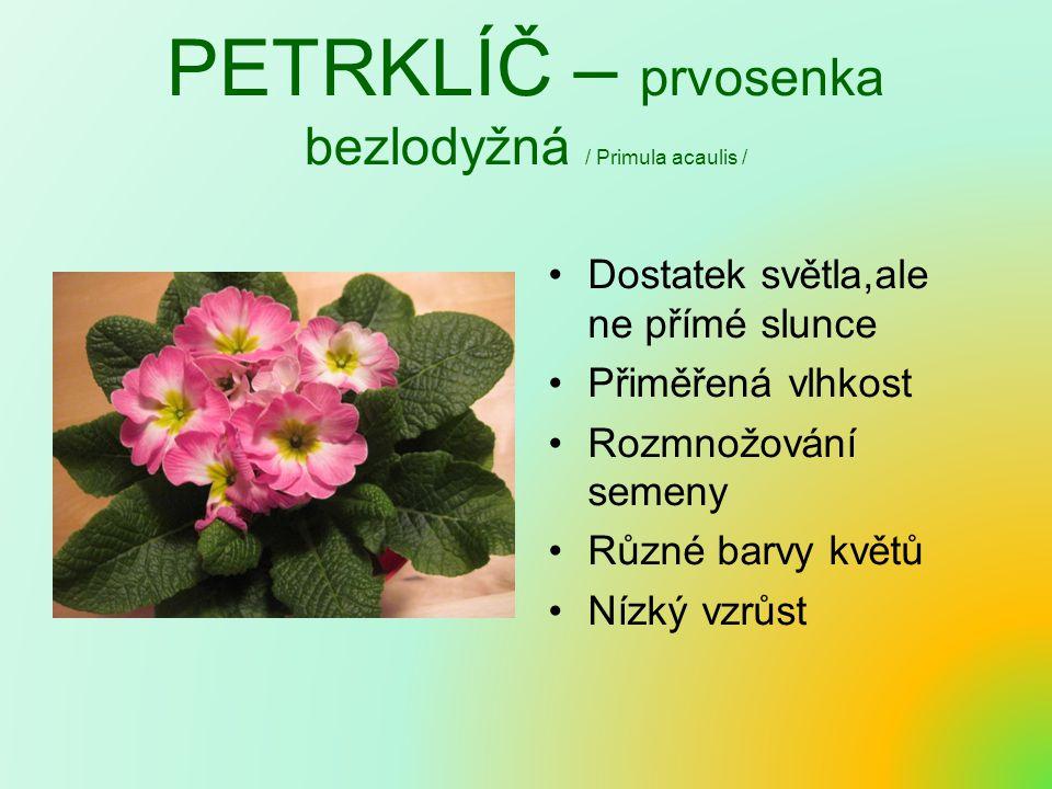 PETRKLÍČ – prvosenka bezlodyžná / Primula acaulis /