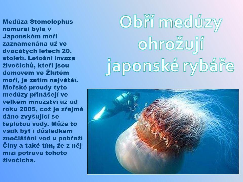 Obří medúzy ohrožují japonské rybáře