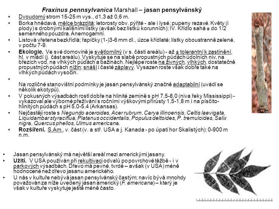 Fraxinus pennsylvanica Marshall – jasan pensylvánský