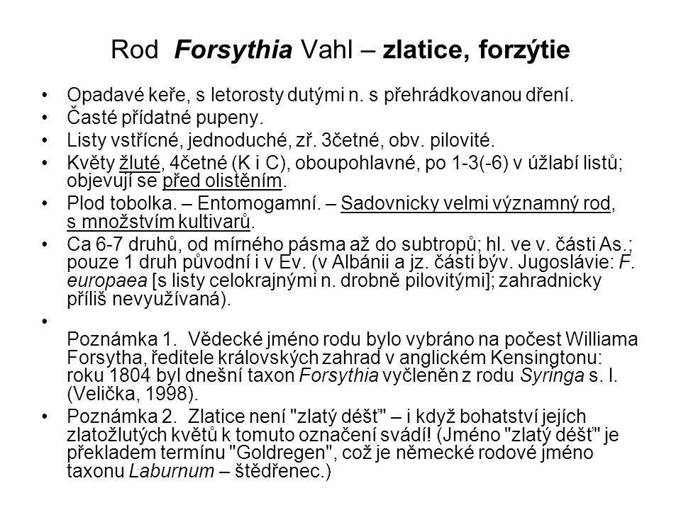 Rod Forsythia Vahl – zlatice, forzýtie