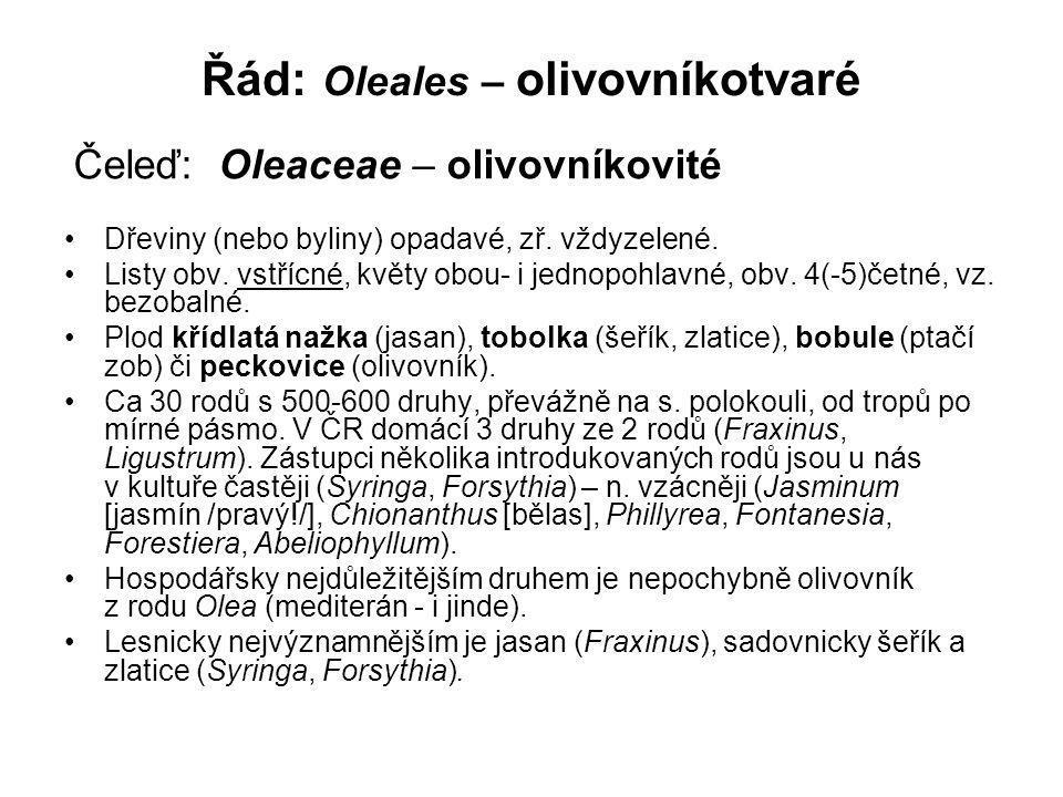 Řád: Oleales – olivovníkotvaré