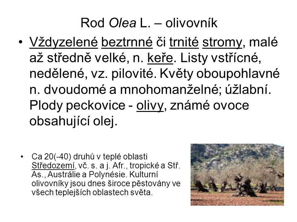 Rod Olea L. – olivovník