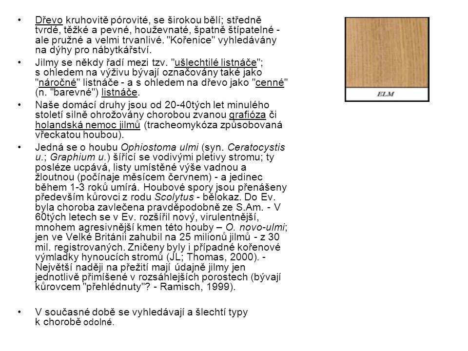 Dřevo kruhovitě pórovité, se širokou bělí; středně tvrdé, těžké a pevné, houževnaté, špatně štípatelné - ale pružné a velmi trvanlivé. Kořenice vyhledávány na dýhy pro nábytkářství.
